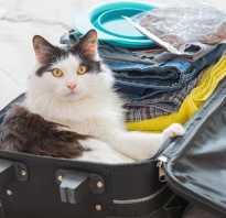 Кот в отпуске