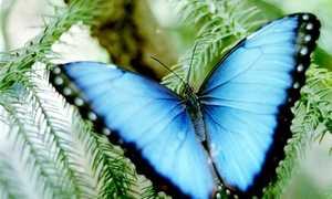 Как умирают бабочки в домашних условиях