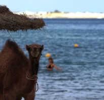 Отдых в египте в декабре отзывы