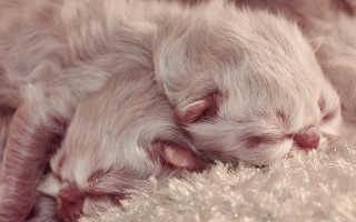 Сонник родились котята