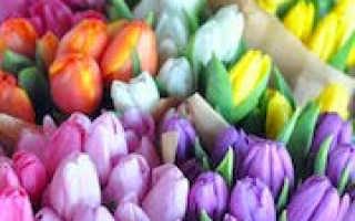 Сонник миллера тюльпаны