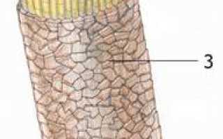 Верхний слой волос